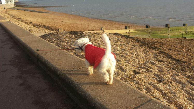 Ernie walks along the sea wall in Southend