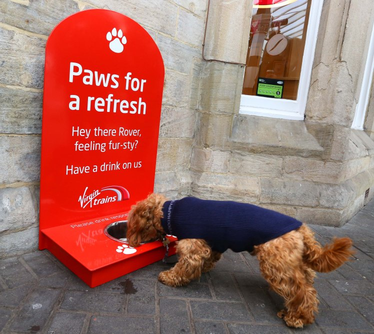 Dog drinks from a Virgin Trains water station