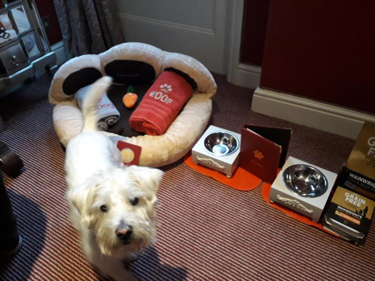Ernie with dog bed, dog menu, toys and treats from Egerton House