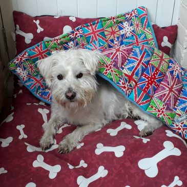 Ernie with his Union Jack quilt from Quilted 4 Paws