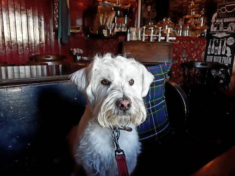Ernie at The Hope Inn, Pembroke