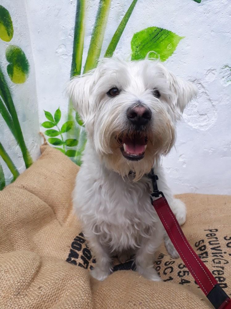A happy Ernie at Bun + Bean in Lewes