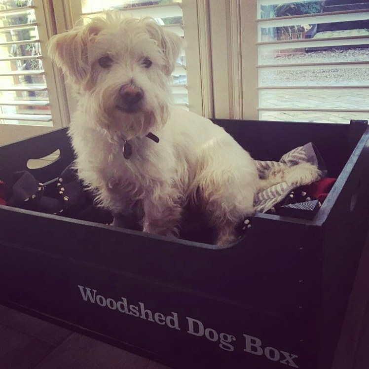 """Ernie in the complimentary """"dog box"""" at Letheringham Water Mill"""