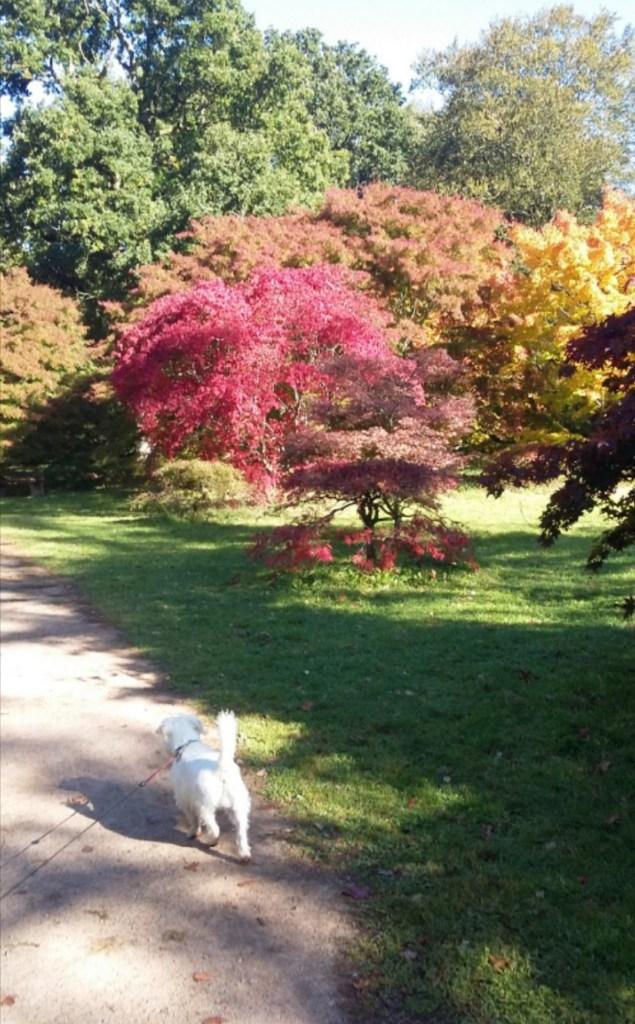 Ernie explores Westonbirt Arboretum