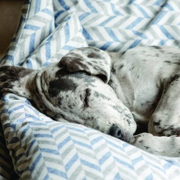 Dog sleeps in Danube nest bed from Project Blu