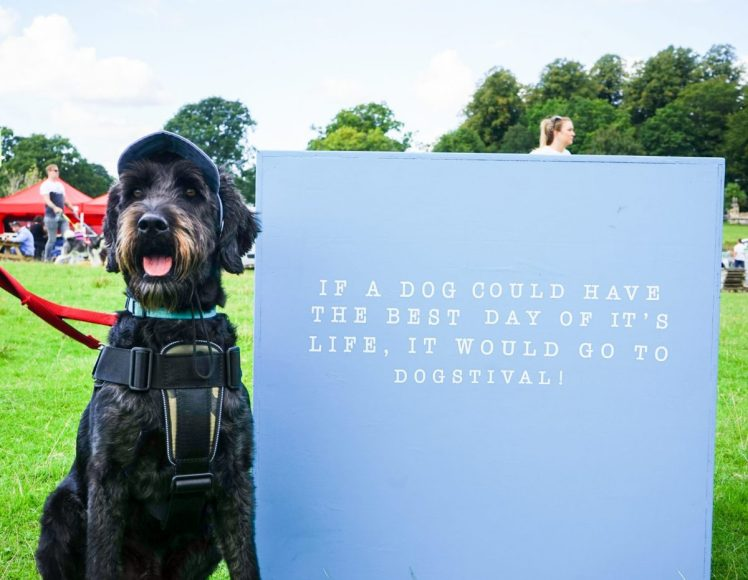 Dog in baseball cap posing by Dogstival sign