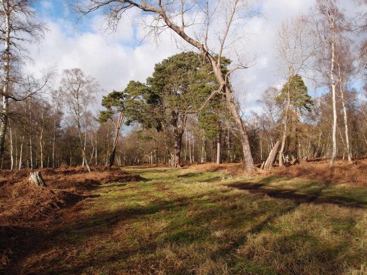 Holme Fen National Nature Reserve
