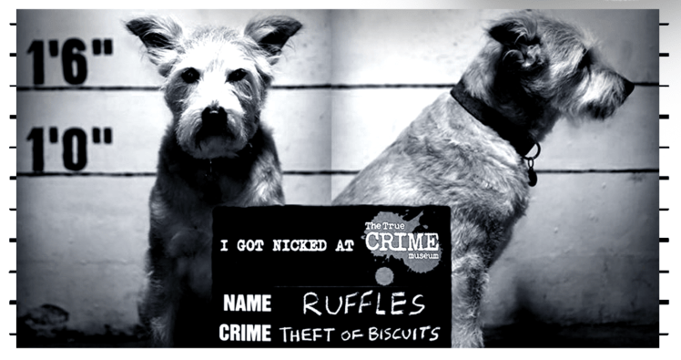 A dog's mugshot at the True Crime Museum in Hastings
