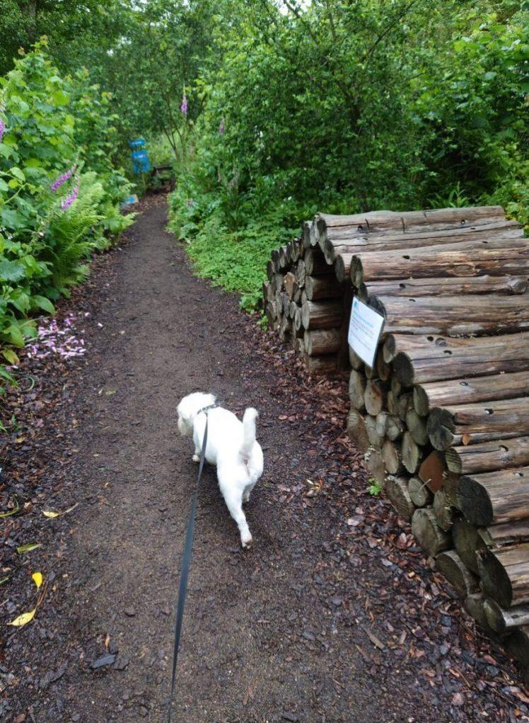 Ernie explores the RSPB Flatford Wildlife Garden