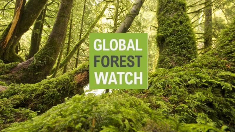 Portale per il controllo dello stato della forestazione globale e degli incendi