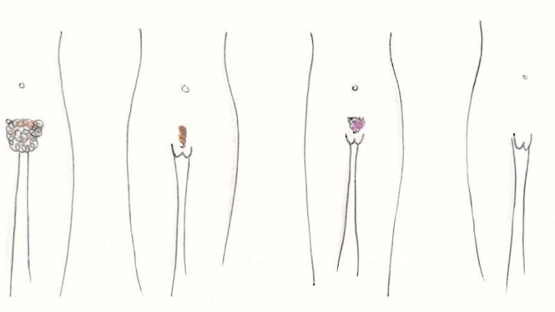 Hvad er de kendtes intim-frisure? Se resultatet – Busk/Glat