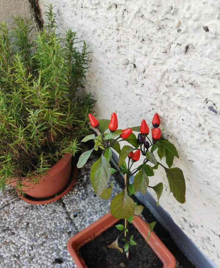 Urban gardening and sustainable food production