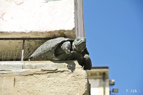 Toscane 2 - Turtle