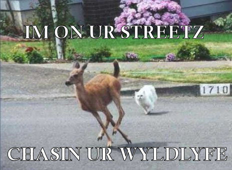 Cat chasing deer onto street away from lawn