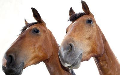 Wie geht Milchreis und was wiegt ein Pferd?