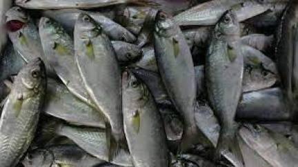 Lüfer balığı faydaları neler Lüfer balığı hangi vitaminleri içeriyor