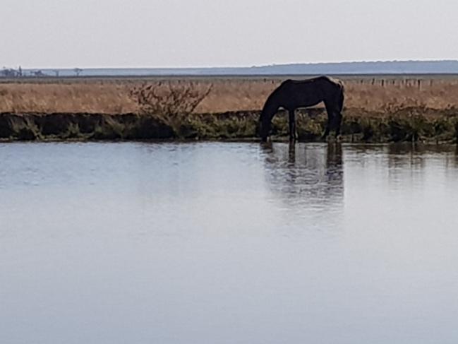 Pferd am Fluss