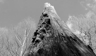 Natur (13)