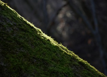 Natur (57)
