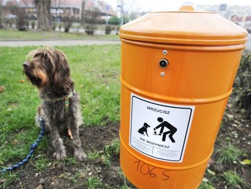 Sprzątanie psich odchodów - pomysł na niszowy biznes