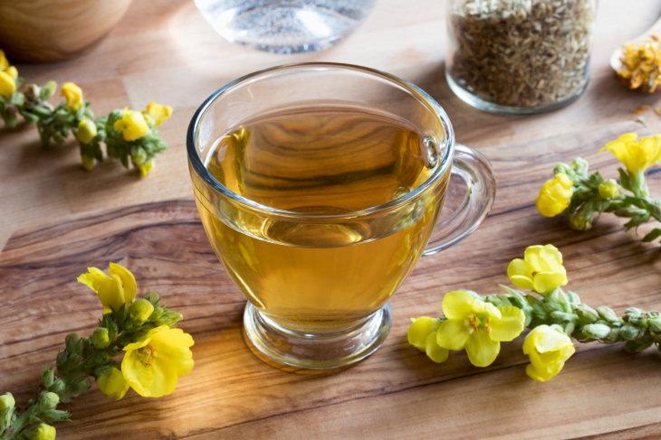 Tés Herbales Especiales Para El Asma y Mejorar La Respiración Té de gordolobo (Verbasscum thapus)
