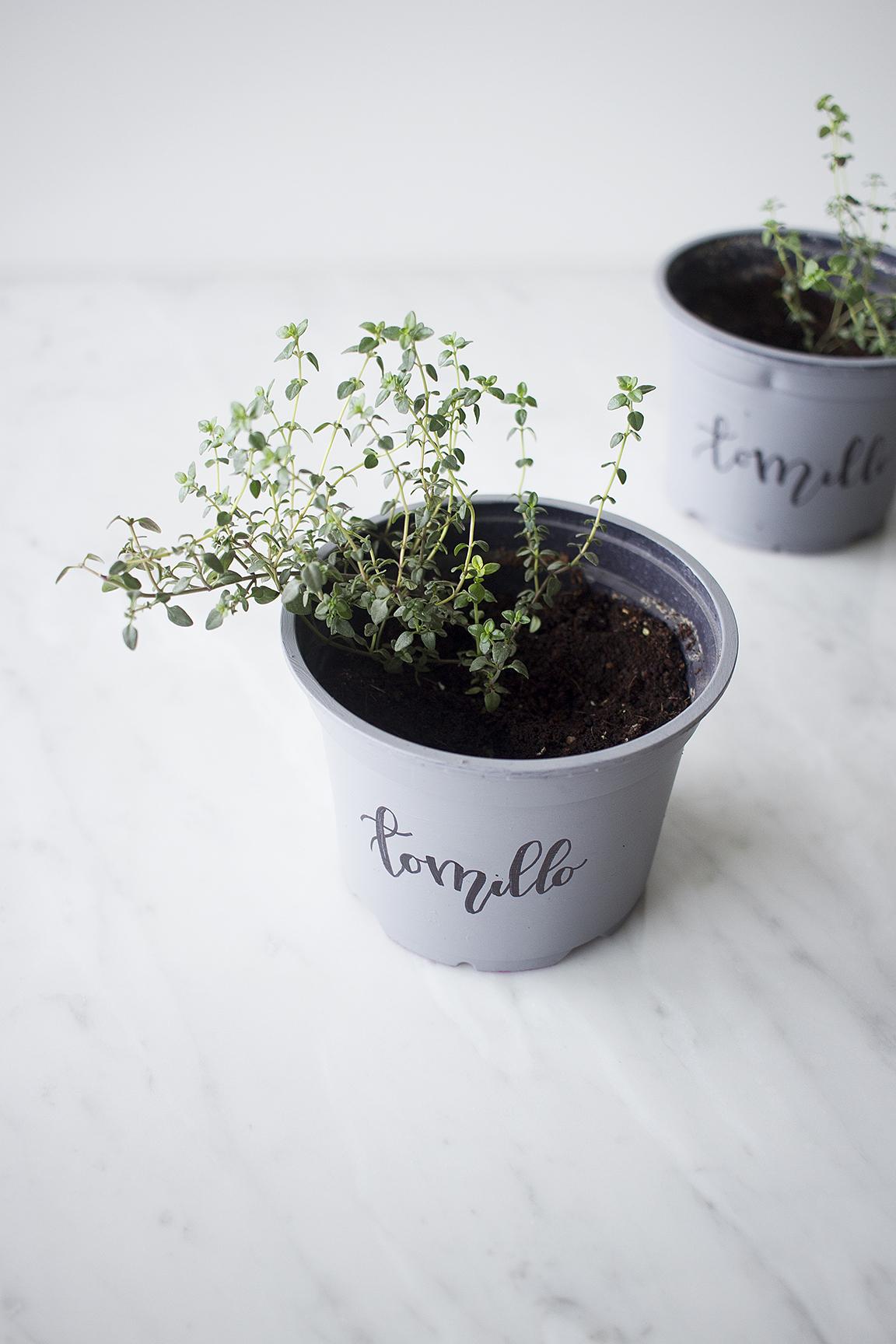 Cómo mantener hierbitas para cocinar en casa