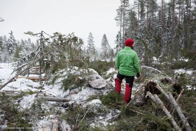 Acción de Greenpeace en el bosque Boreal
