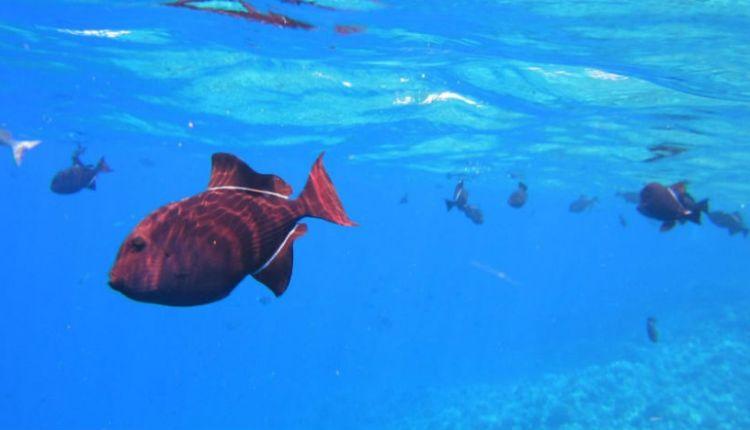 peces-exoticos