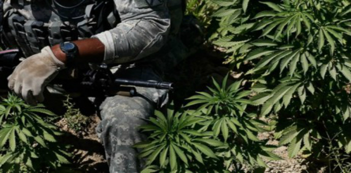veteran-cannabis-460×260