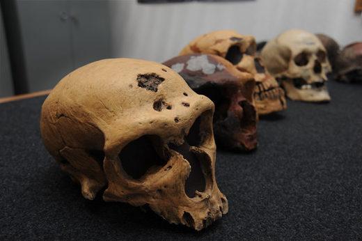 cráneos neandertales