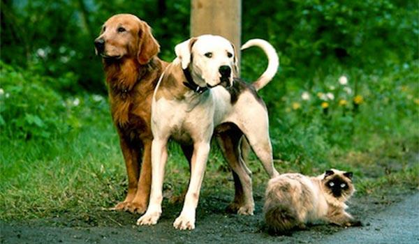 Animales del cine