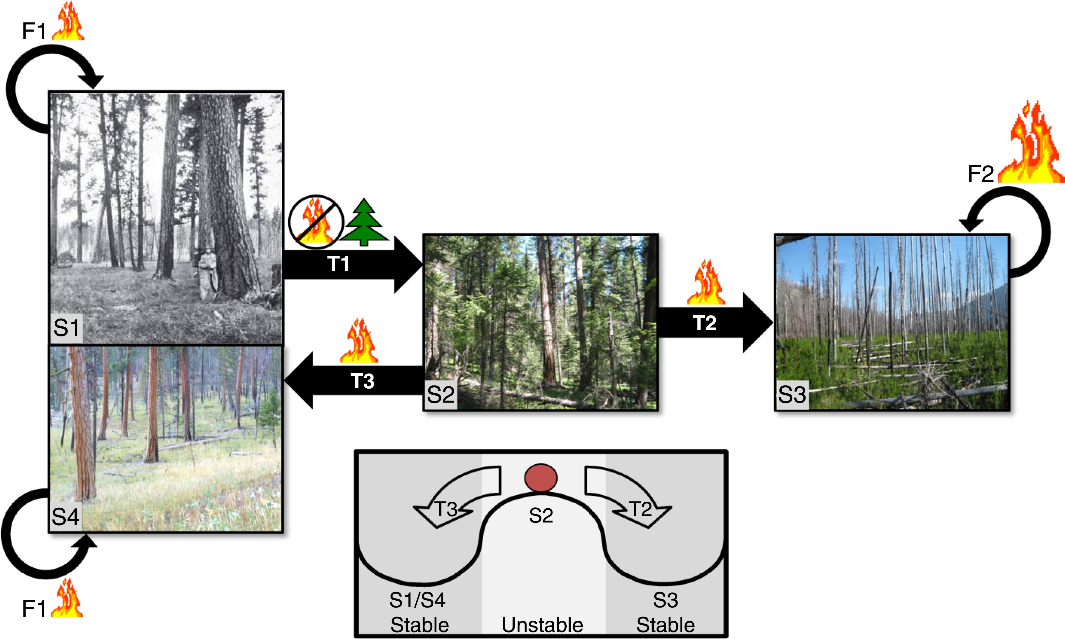 Latent Resilience In Ponderosa Pine Forest Effects Of