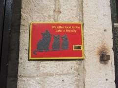 catmuseum_kotor