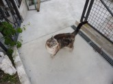 Girolamo, the resident cat in our little Trieste housing complex.