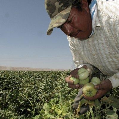 #JornaleroPower: Ahora los campesinos podrán denunciar a los granjeros abusivos
