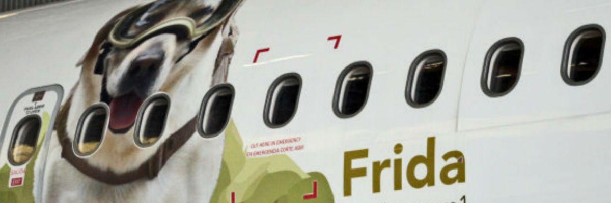 El avión de Frida, la perrita rescatista