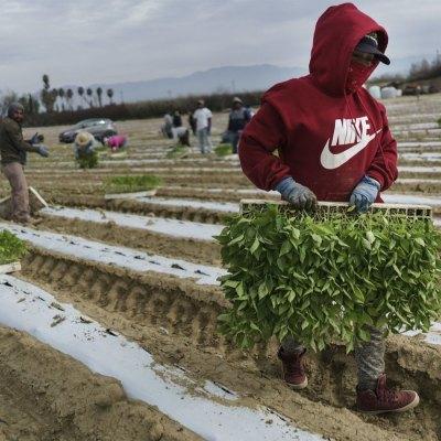 #CamposVacíos: Nadie va a tomar los trabajos que están dejado los inmigrantes, aceptan granjeros