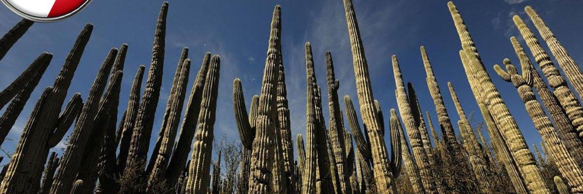 #Joya: El nuevo sitio Patrimonio de la Humanidad de México para el mundo