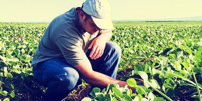En EUA se busca a mexicano agrónomo para trabajar por 30 mil pesos mensuales