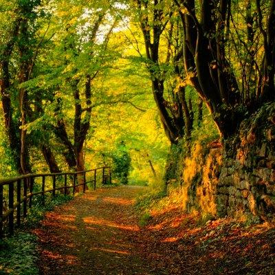 Los bosques mexicanos que no debes dejar de visitar en el verano