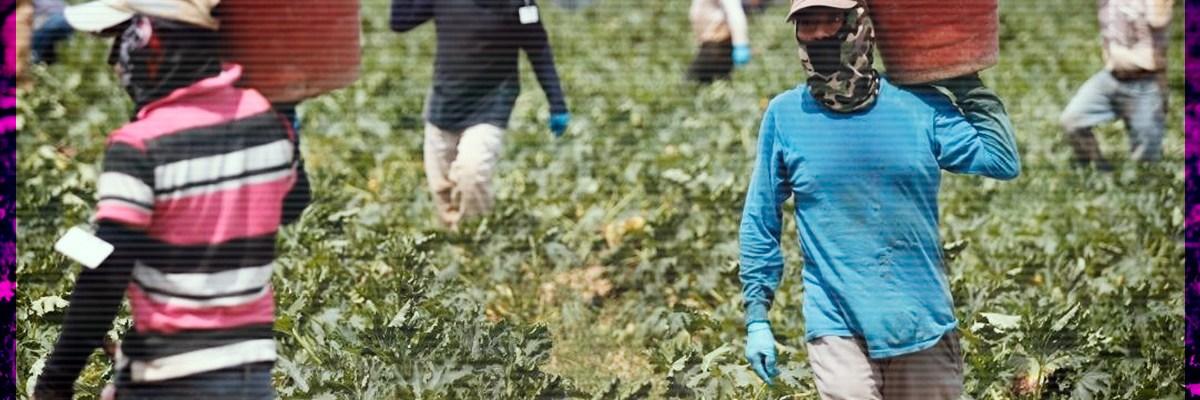 Anuncian que miles de migrantes mexicanos serán repatriados por el COVID-19