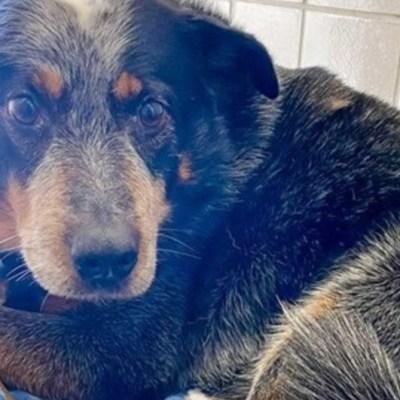 Perrito intentó abrigar a su dueño, pero murió por las bajas temperaturas