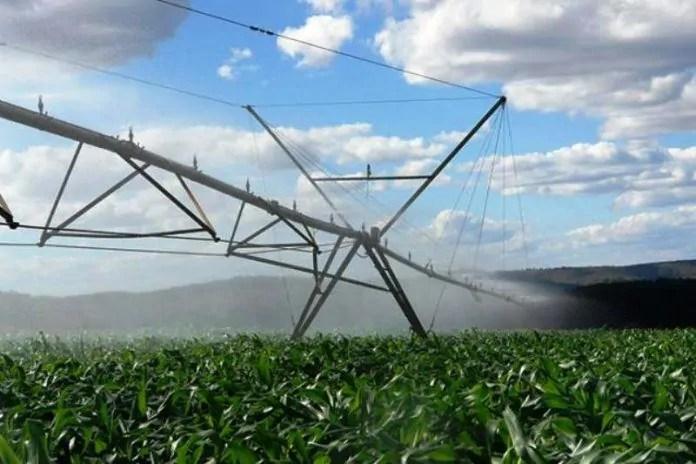 Resultado de imagem para area irrigada