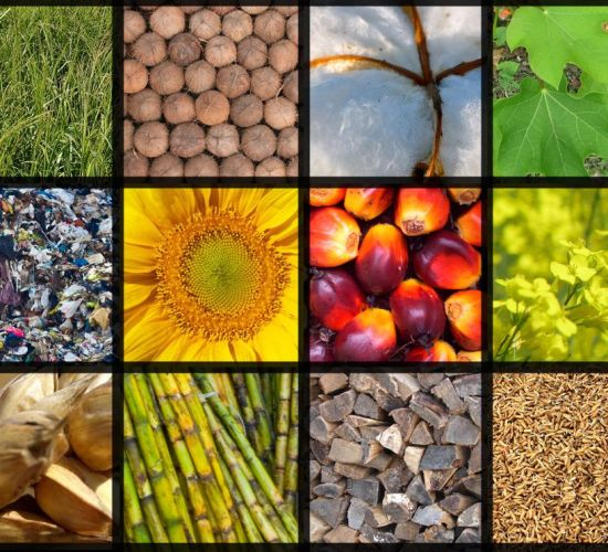 Increasing the sustainable use of biomass could bring significant benefits to the Western Balkans
