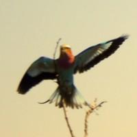 Plastic Birds - In Time
