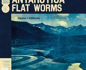 Flat-Worms-Antarctica