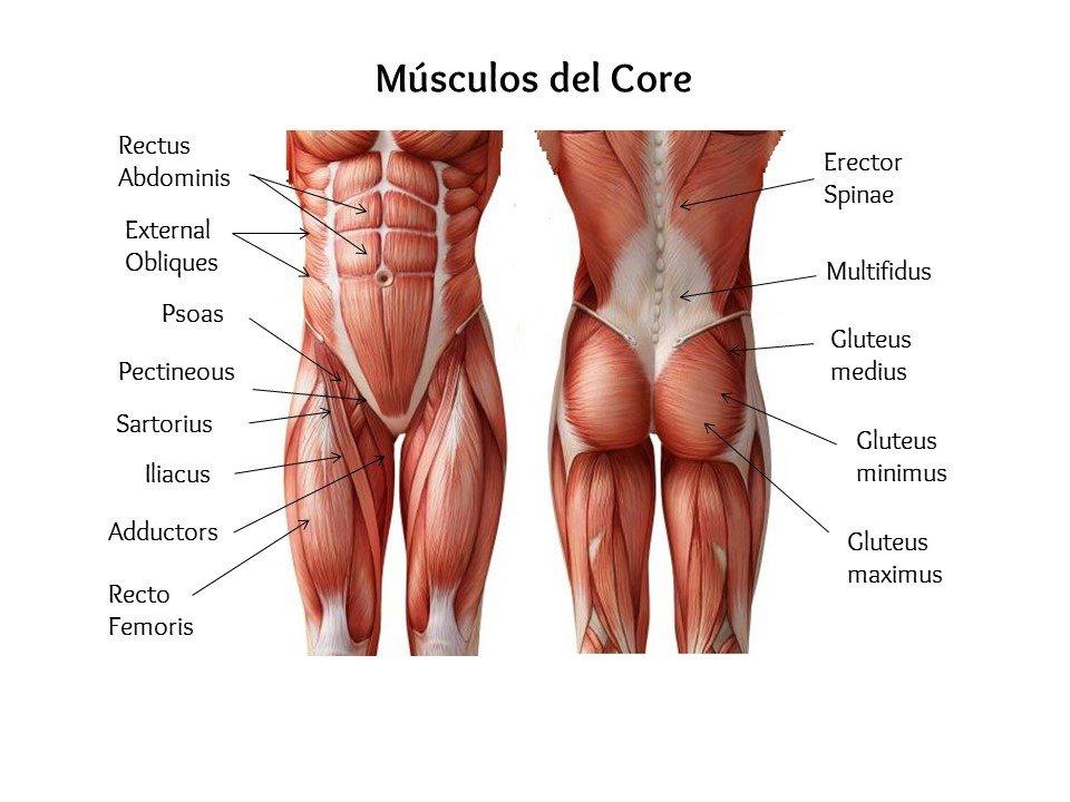 Músculos del core para escaladores