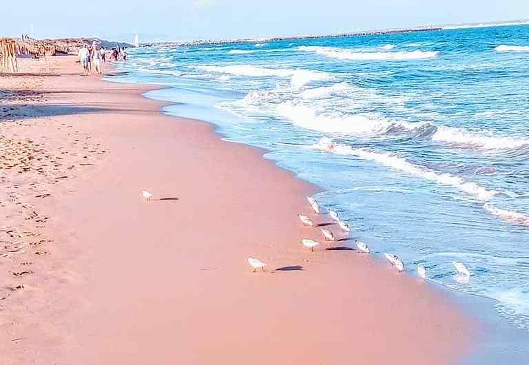 Descubre la arena rosa de Pink Sand Beach en las Bahamas