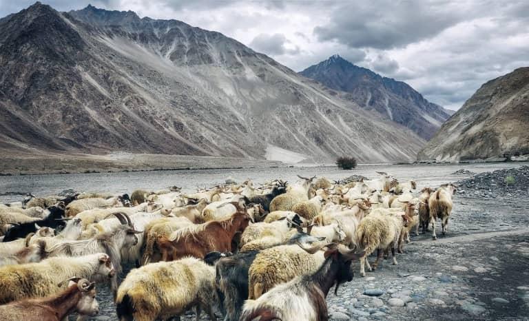 El Valle de Nubra, turismo de montaña en la India
