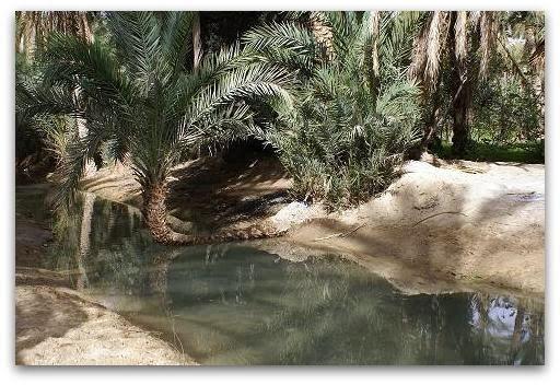tozeur palmeraie
